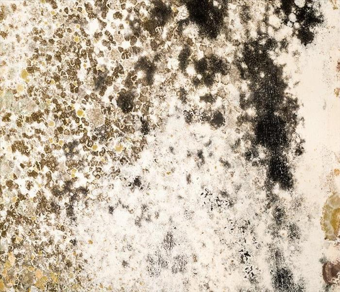 Mold Remediation The Appropriate Steps to Take When You Find Black Mold in Your Amherst Home