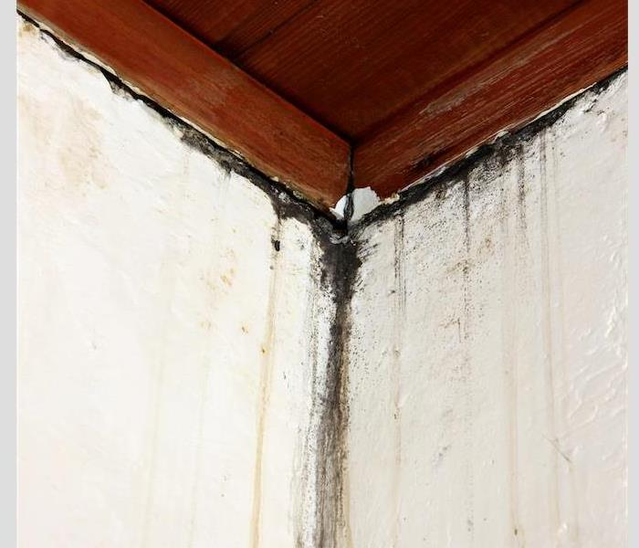 Mold Remediation Fight Mold, Mildew, and Rot - Get Mold Remediation Services For Your Amherst Area Home