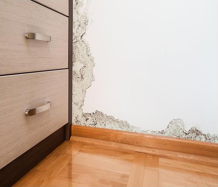 Mold Remediation The Advantages Of Hiring SERVPRO To Remediate Mold Damage In Your Amherst Home
