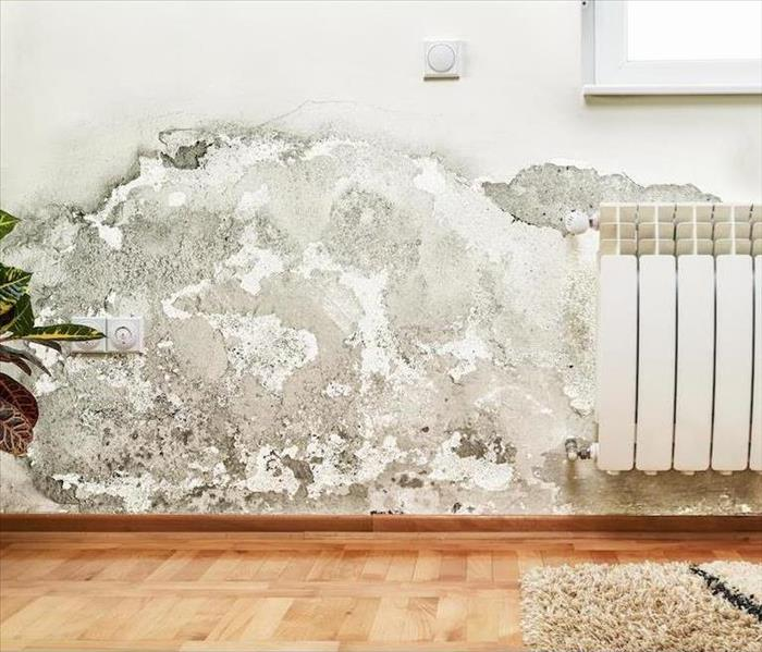 Mold Remediation Professional Mold Remediation Restores Amherst Homes to a Healtheir, Pre-Loss State