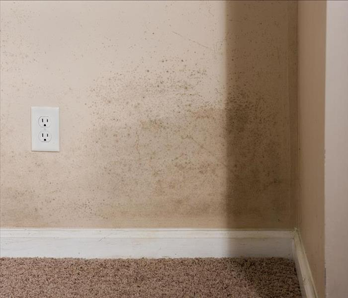 Mold Remediation Why You Need Professional Help in Dealing with Mold Damage to Your Amherst Property